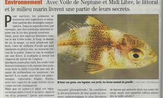 Articles sur la plongée en apnée et la biologie marine