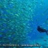 Île de Kanawa en Indonésie (Parc national des Komodos)