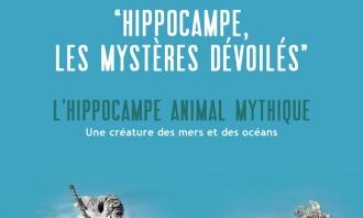 Hippocampe, les mystères dévoilés
