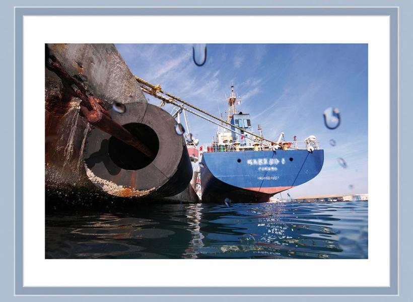 Les ports, oasis de vie insoupçonnée