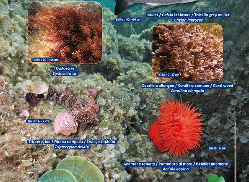 Sentier sous-marin de la Réserve Naturelle de Scandola