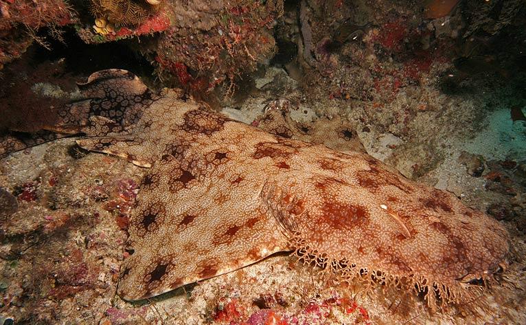 Faune des fonds coralliens, Papouasie 2011