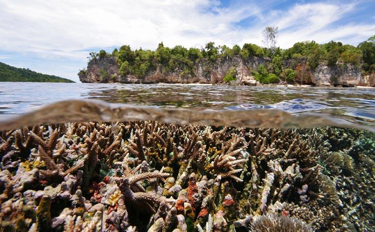 Mangrove, lagon, platier, récif, papouasie 2011